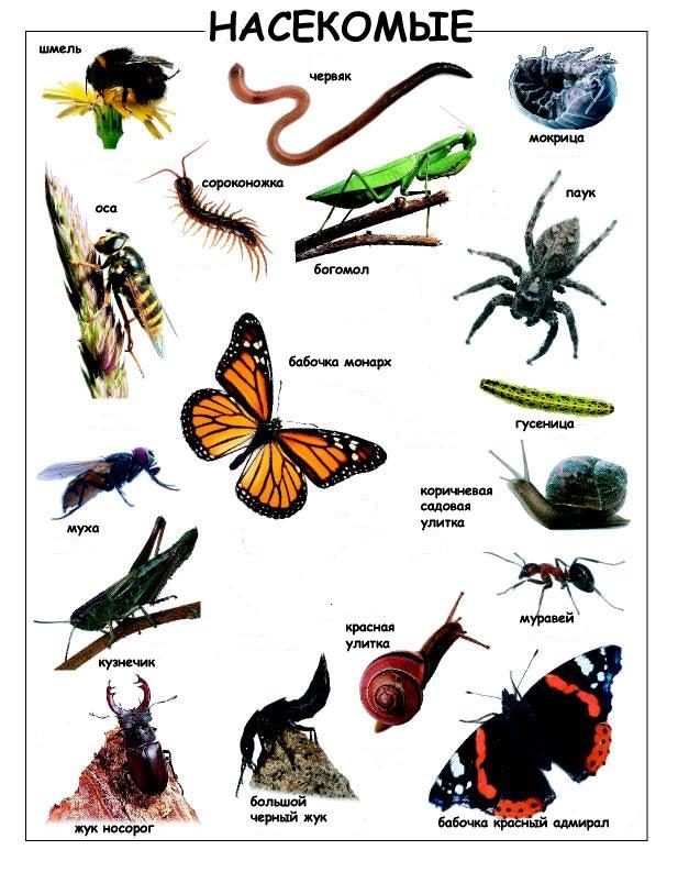 детей дождевой картинки для червь