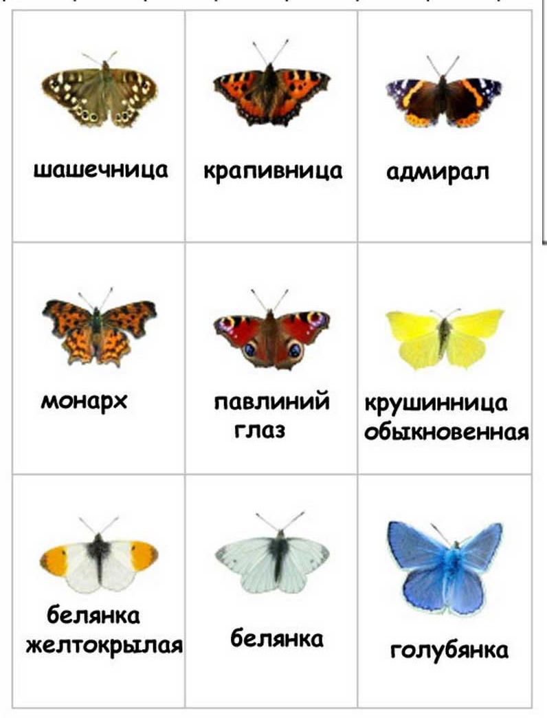 Подборка изображений бабочек с этого