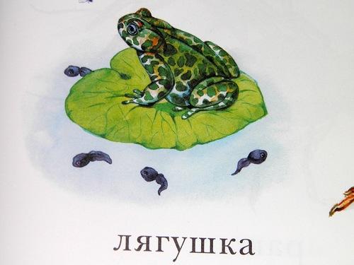 Биологические ляпы №231 - 240