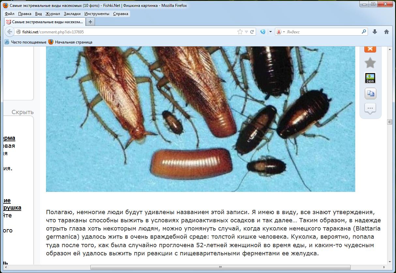 насекомые паразиты человека и сельскохозяйственных животных