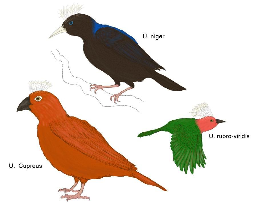 Bestiary of the future - Birds