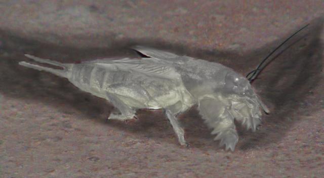 различные насекомые в степной экосистеме их предназначение
