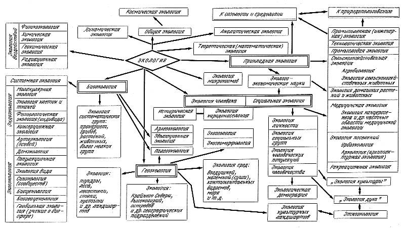 Разделы экологий схема