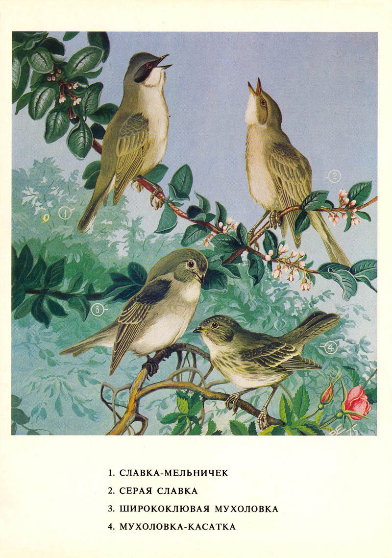 Приморье 2016 (часть 4) - Дневник наблюдений птицДневник ...   1139x800