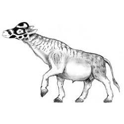 Характерные представители фауны
